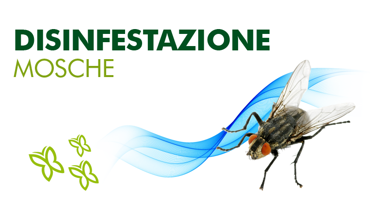 mosche.png