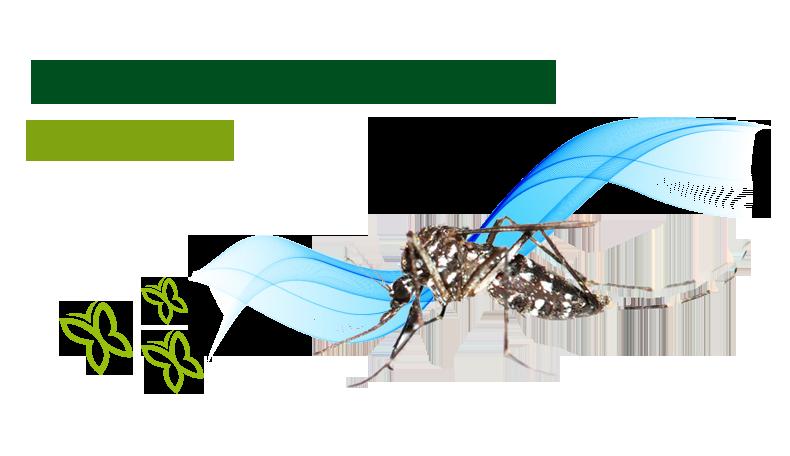 zanzare.png